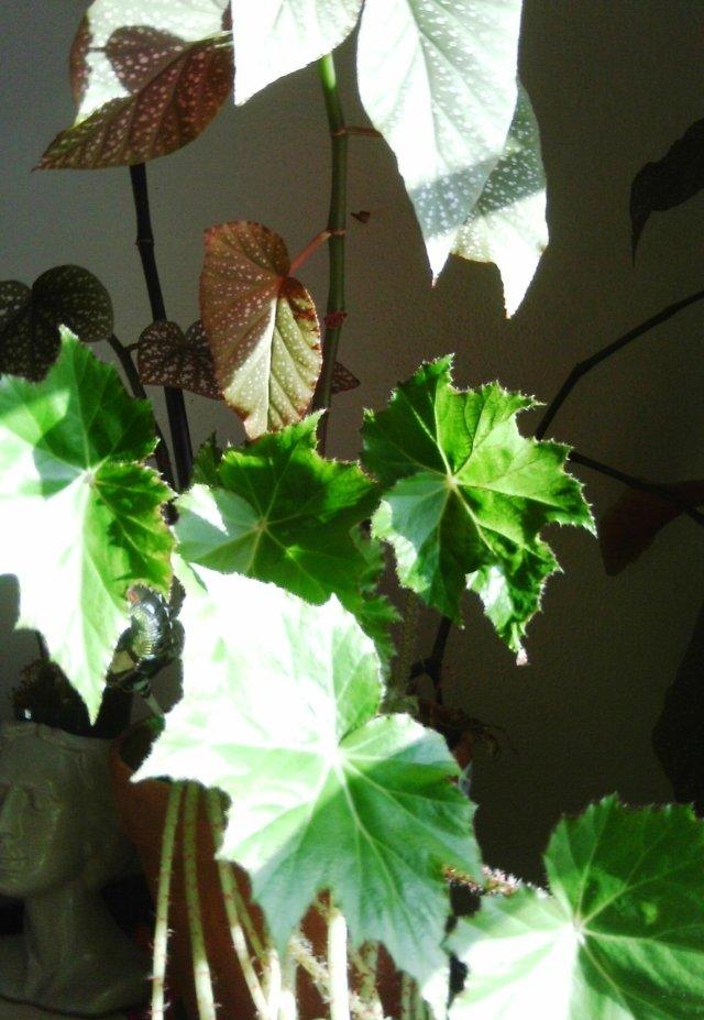plant 1-20-13