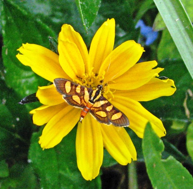 butterfly on bright yellow flower