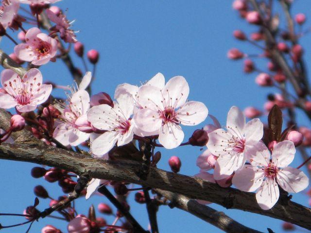 nan blossoms