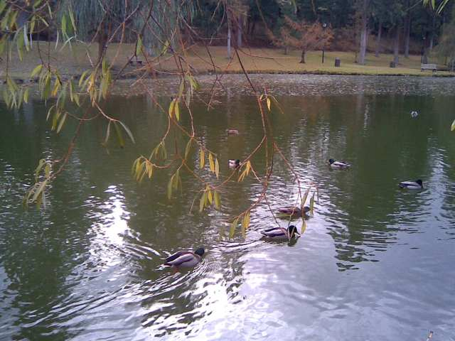 manito duck pond