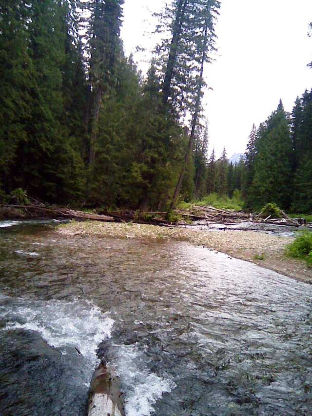 ross creek cedars 3 6-14-12
