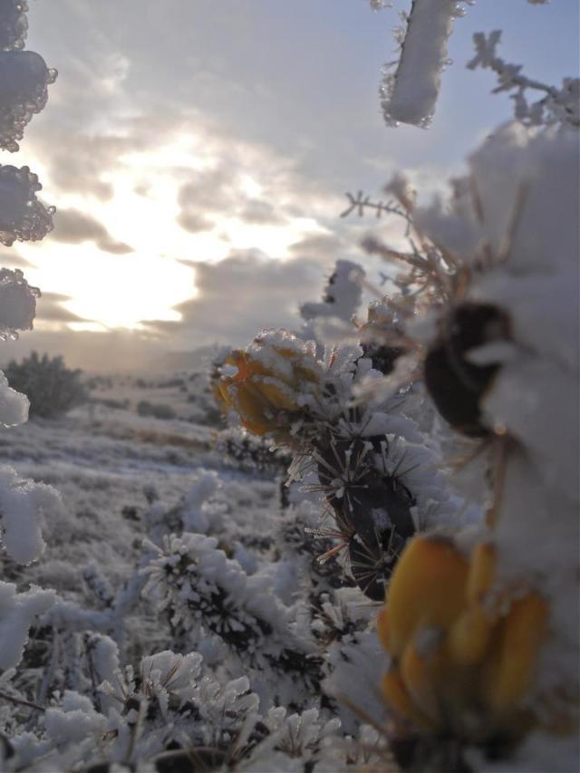 sam winter orange flower 5