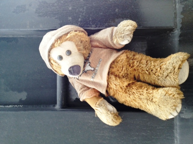 bear on truck
