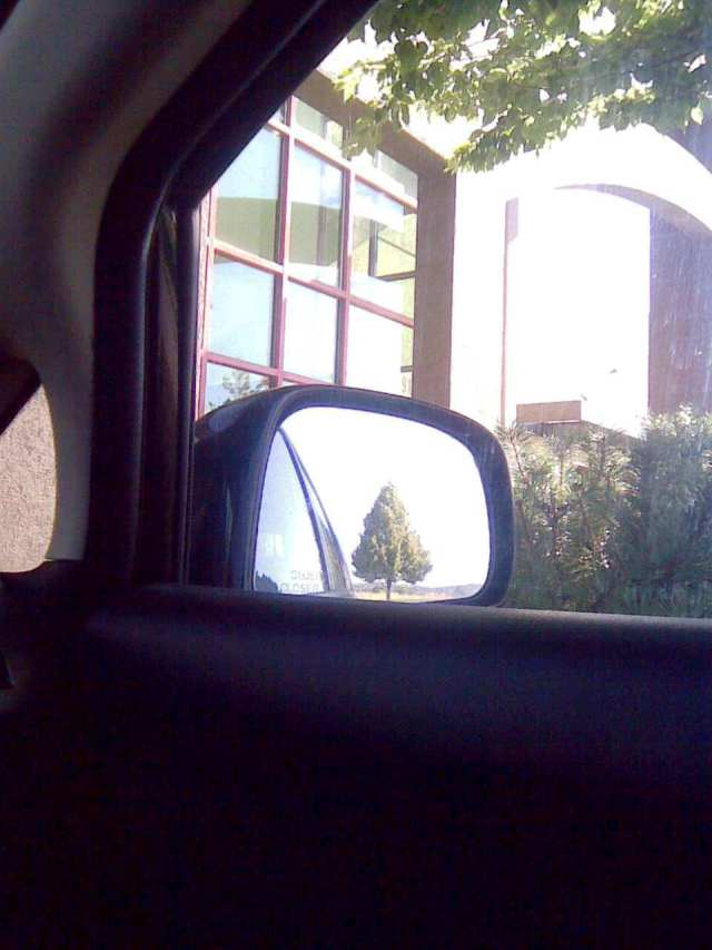 tree in mirror