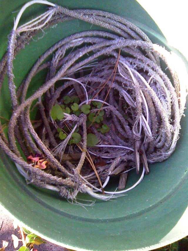 rope in pot