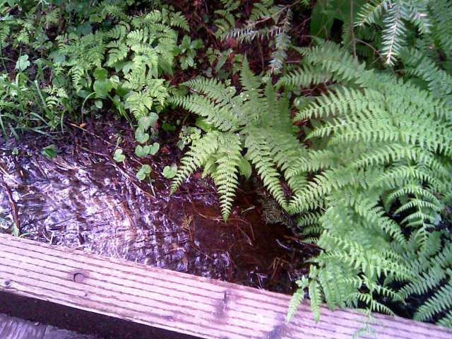ross creek cedars 13 6-12-12