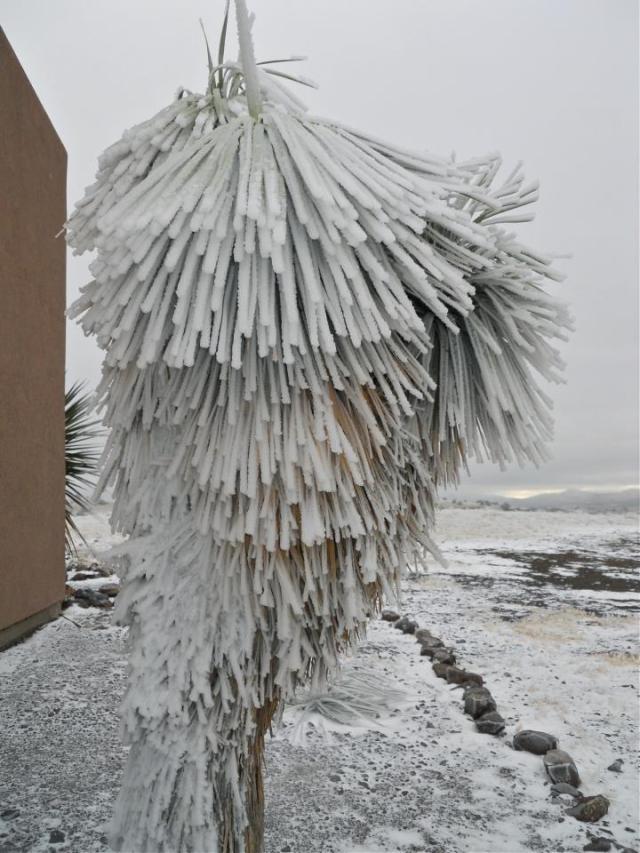 Sam Cactus winter Alpine
