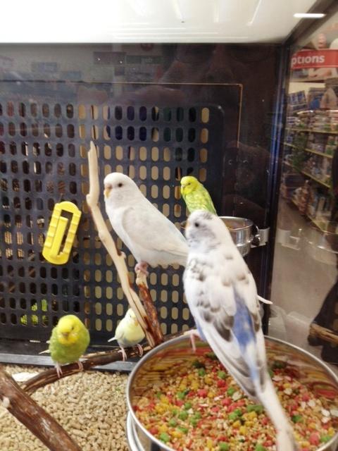 steve birds