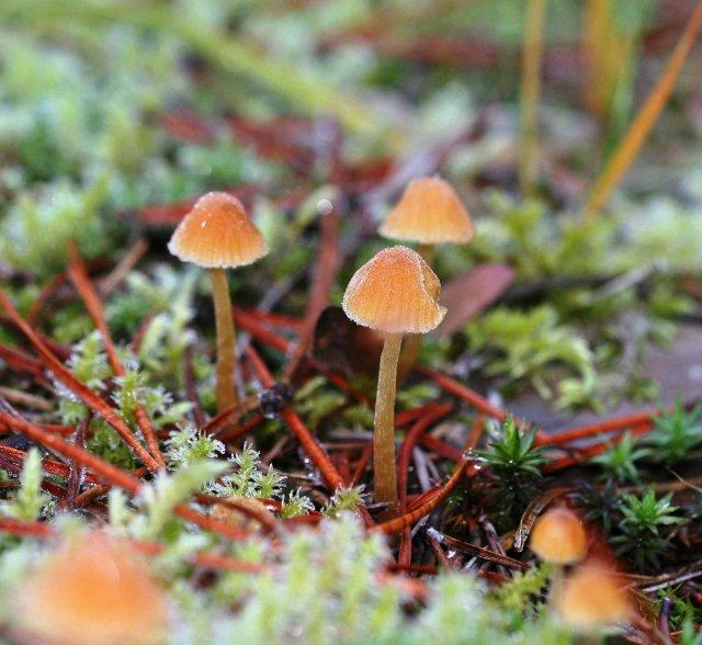 magical_mushrooms Priest Lake1 john