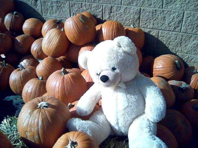 parker pumpkins 1