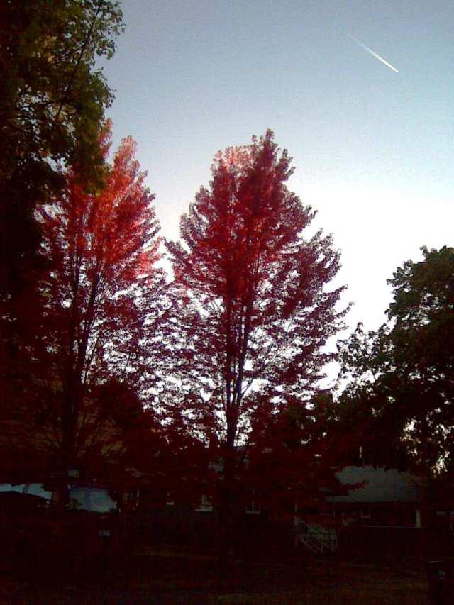 trees 10-9-12