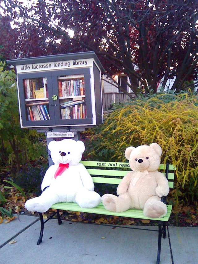 little library lacrosse bears