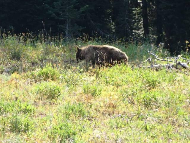 lynn bear