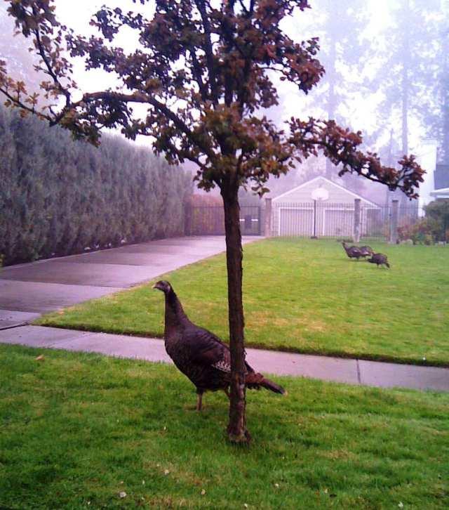 turkey on 22nd