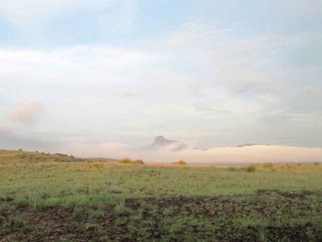 cathedral mountain fog
