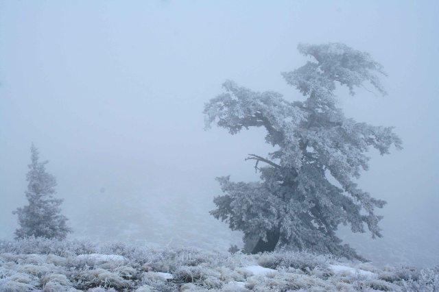 john frosty tree