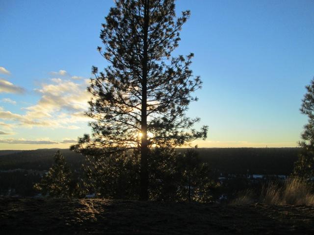tree 1-19-15 sunset