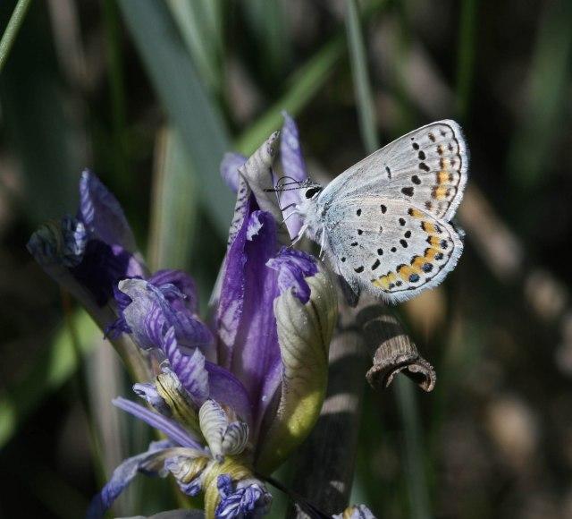 john butterfly on glad u