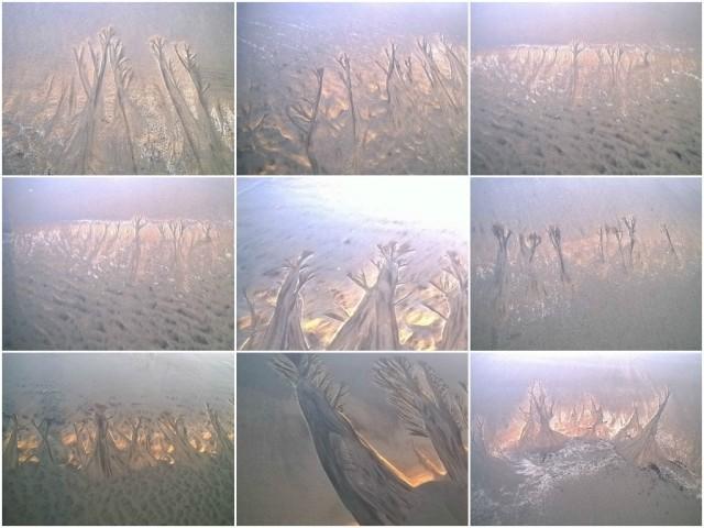 FotorCreated Sand Trees