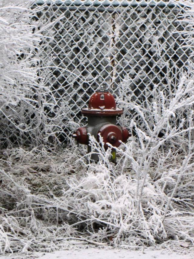 fire hydrant frost