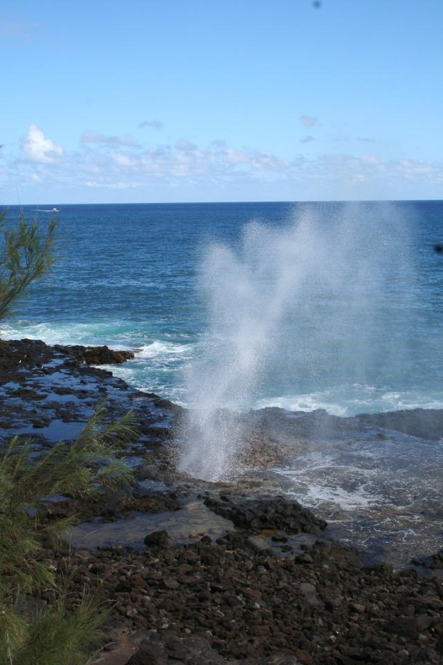 john ocean spray U