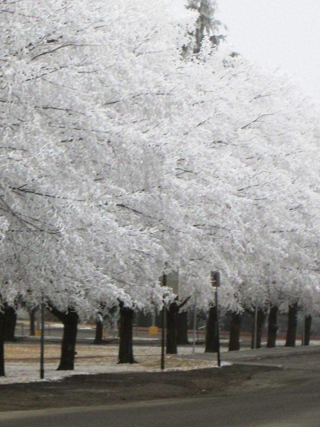 trees frost U