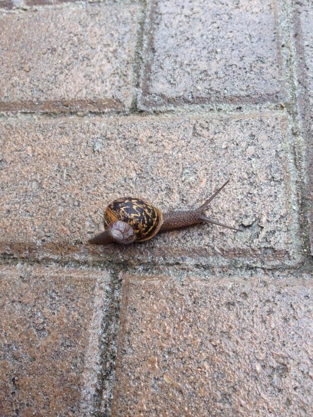 nan snail u