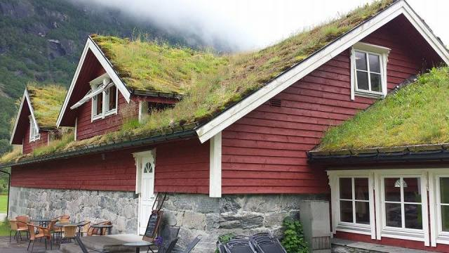 eloy norway grass on roof