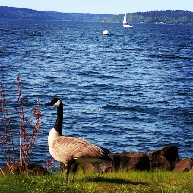 nan goose lake u