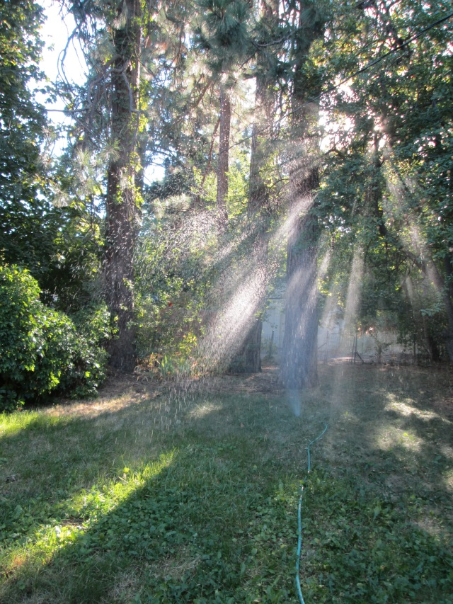 8-7-15 backyard sprinkler1 u