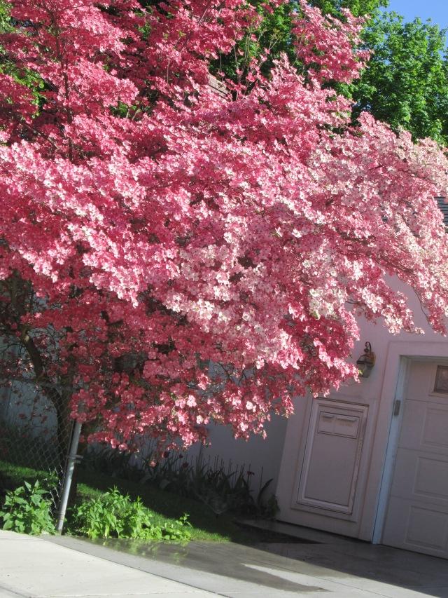 may 3rd tree u