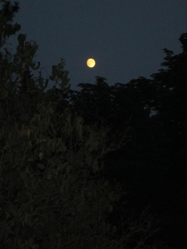 moon 8-28-15b u