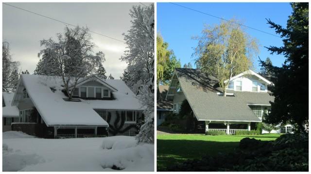 Tree thru Roof collage