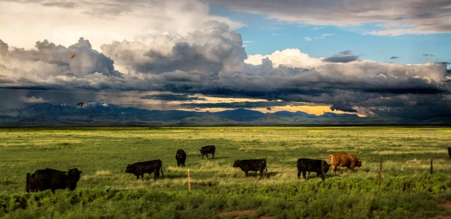 avant-clouds-with-cows-near-valentine-tx