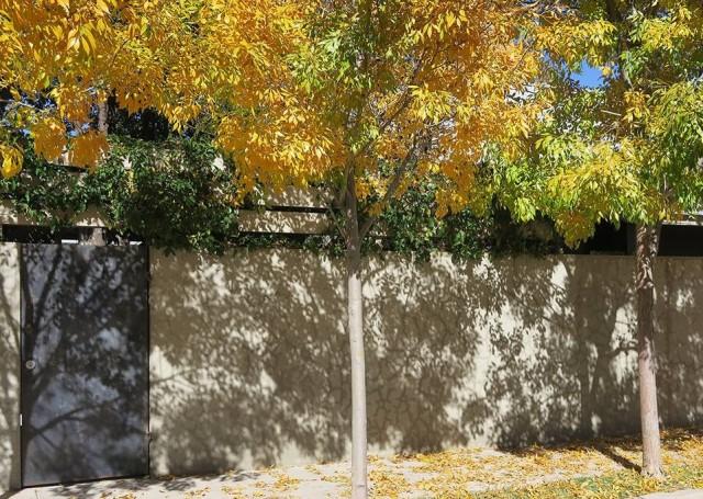 martha-fall-trees