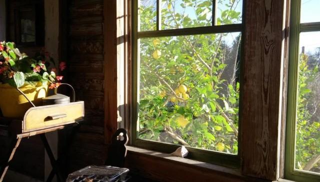martha-lemon-tree-san-antonio