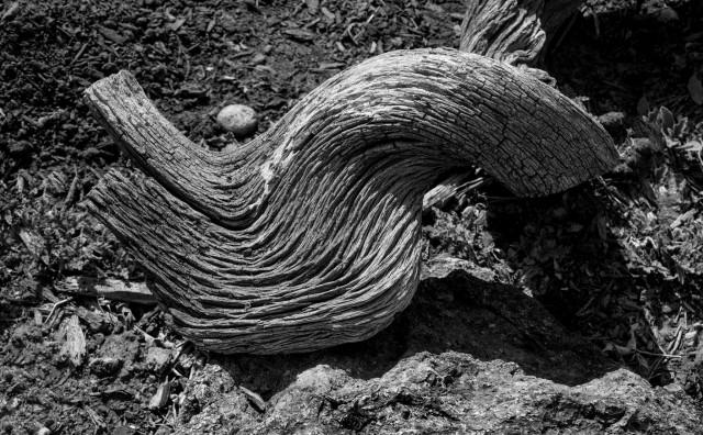 avant-old-wood