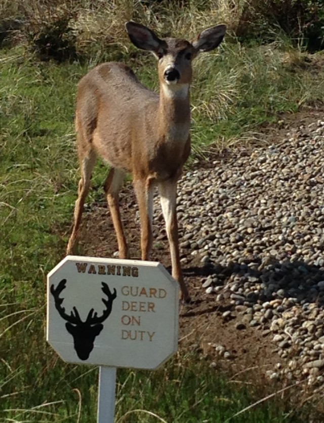 nan-guard-deer