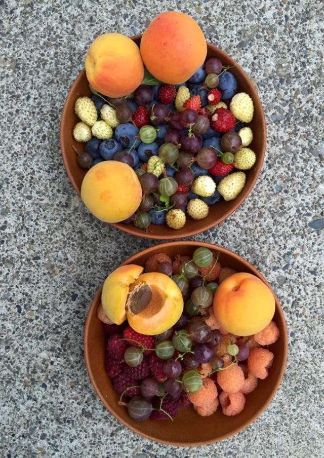 tanya-fruit